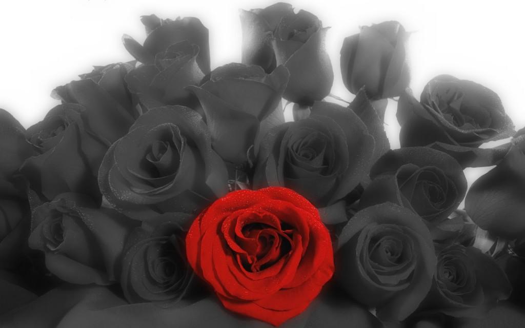 Una rosa in memoriam
